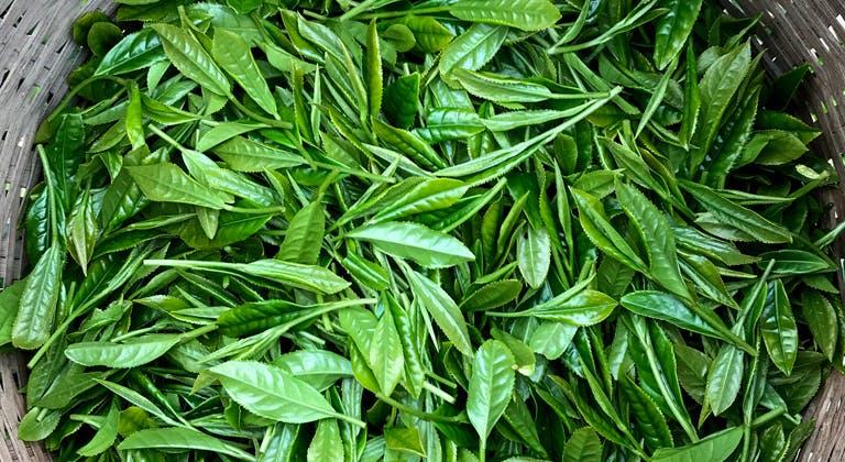 茶畑を一望できるテラスをつくり、静岡茶発祥の地を守りたい!_2