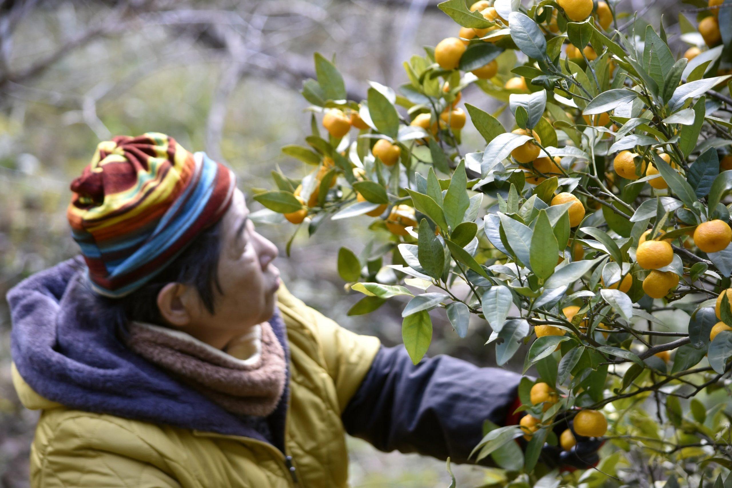 MIRUIプロジェクトVOL.20 沼津戸田橘が香るアロマエアミストを届けたい!_2